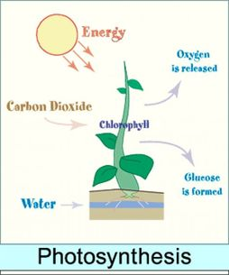What do plants need to survive on land the amazing plant this diagram shows the process plants make food photosynthesis photo courtesy of masterman535 ccuart Gallery